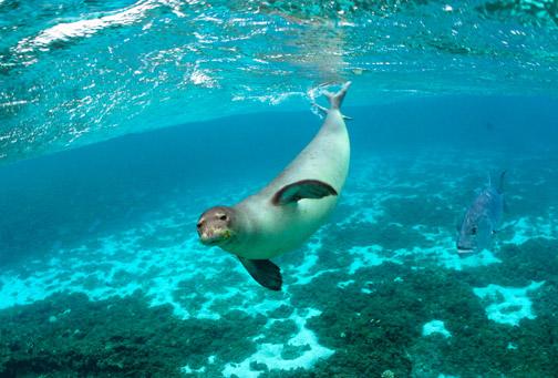 POPs, Plastic and Hawaii's Marine Life
